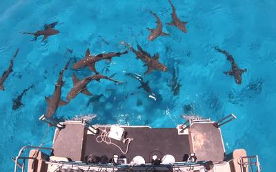 """Youtuber """"prueba"""" si los tiburones pueden detectar una gota de ..."""